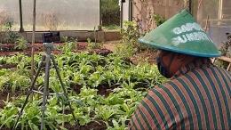 Petani Paparkan Pengalam Bertani Organik / dokpri