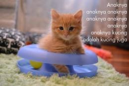 Diadaptasi dari: https://catadoptionteam.org/news/how-to-prepare-for-a-kitten/