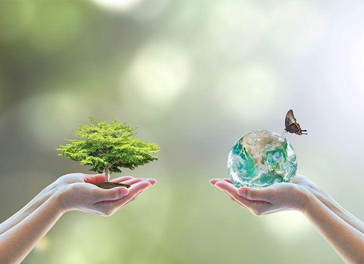 Demi Bumi (totabuan.news)