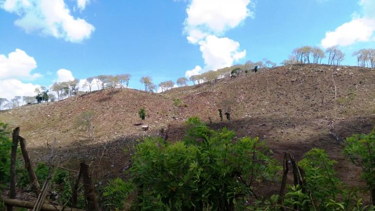 Hutan menuju Desa Lere Kecamatan Parado Bima, 2019 (Dokpri)