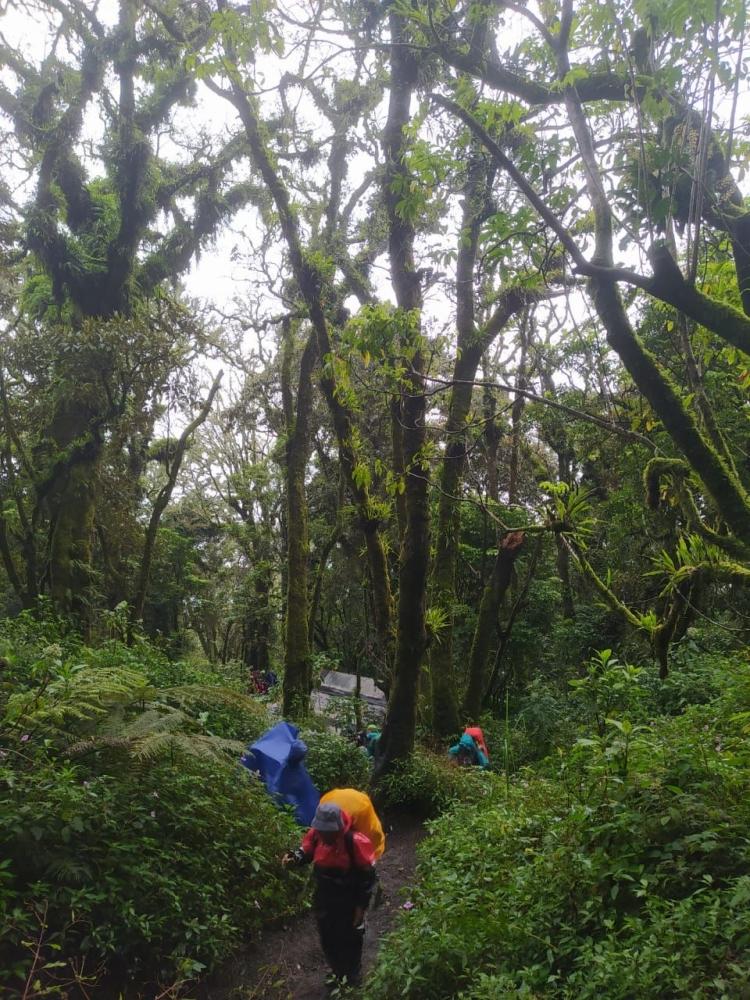 Gunung Slamet 3428 mdpl ( dok.pribadi )