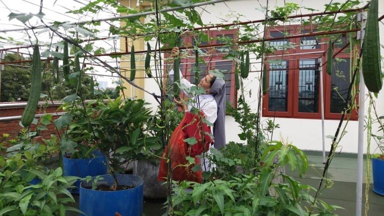 Mengurus kebun ( Sr.Patrisia,OSF)