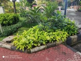 Dedaunan hijau yang menyegarkan| Sumber: dokumentasi pribadi