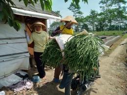 Ada juga petani yang langsung kirim ke rumah. Dokpri