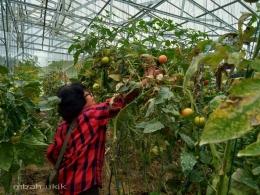 Libatkan keluarga memeriksa hasil pertanian. Dokpri