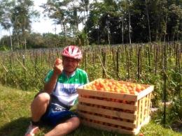 30 kg tomat untuk Pasar Induk Gadang. Dokpri