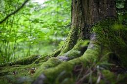 Ilustrasi hutan | Pexels/mali maeder