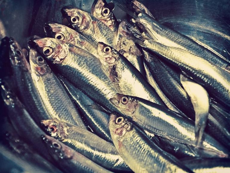 Ilustrasi dagangan ikan oleh coombesy dari pixabay.com