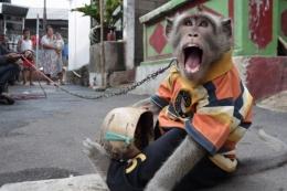 Topeng monyet (disk.mediaindonesia.com)