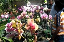 Bunga nasional anggrek bulan (Kompas.com)