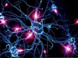 ilustrasi sel saraf otak manusia - https://ar.thpanorama.com/