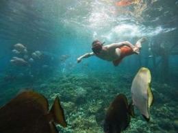 Berbagai ikan menemani wisatawan berenang tanpa risih (dok. Misooltrip)
