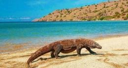 Hewan Komodo yang berada di Pulau Komodo