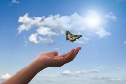 Ilustrasi kupu-kupu yang terbang tinggi. Sumber: Gambar oleh Gerd Altmann dari Pixabay