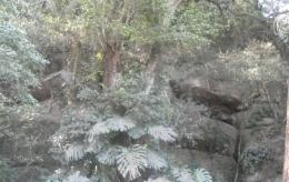 Hutan kecil yang harus dilewati (dok pribadi)