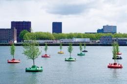 20 pohon Elm Belanda ditanam dan dipasang sebagai