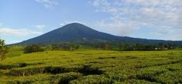 """""""Pemandangan Kebun Teh Dan Gunung Dempo Pagar Alam (Dokumen Pribadi)"""