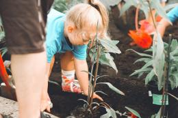 Kiat tingkatkan minat anak makan sayur dengan menanam tiga sayuran bergizi | Photo by Anna Earl on Unsplash