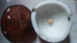 Kelapa tua, tekstur padat dan kulit ari coklat gelap / foto: rumahislami.net