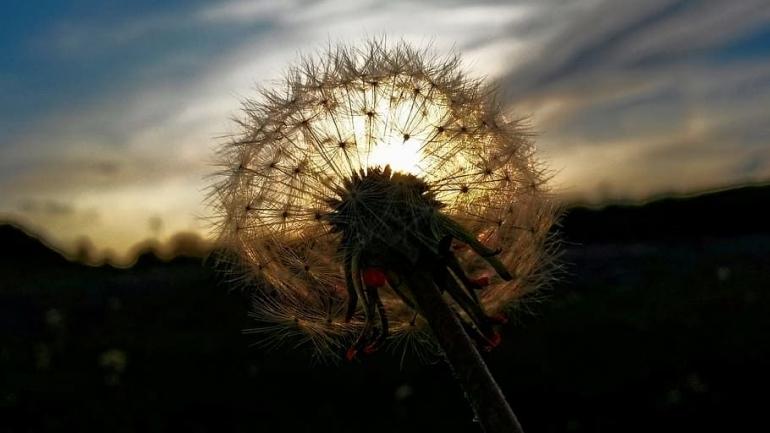 Ilustrasi piqsels.com