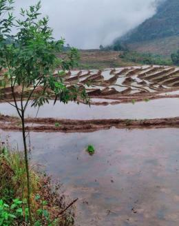 Persawahan Pede, Desa Mokel, Kecamatan Kota Komba Utara, Matim, NTT / dokpri.
