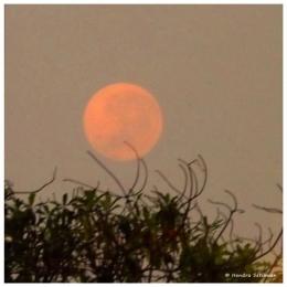 Warna rembulan yang berubah bisa terjadi karena kondisi atmosfer bumi (foto: dok. pribadi)