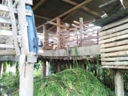 Pakan ternak kelinci dari hasil sampingan pertanian wortel (Dokumentasi pribadi)