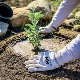 House of Marley bekerjasama dengan One Tree Planted, telah berhasil menanam pohon hingga 300.000 lebih, 50.000 di antaranya ditanam di Indonesia.