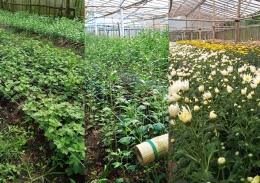 DOKPRI: proses pertumbuhan bunga