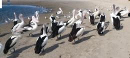 burung burung bermain dengan suka ria (dok pribadi)
