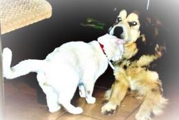 ket.foto; anjing dan kucing berkasih kasihan/dokumentasi pribadi