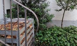 Tempat pelapukan daun (Dokumen pribadi oleh Ino)