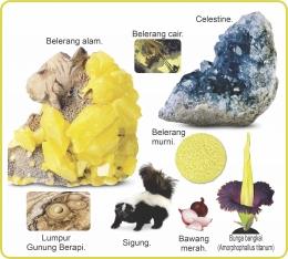 Berbagai unsur dan senyawa belerang. Sumber: buku Periodic Table Book - A Visual Encyclopedia, hlm. 168.