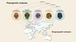 Era awal evolusi manisa dan posisi Manusia Naga. Sumber: Ni et al. (2021)