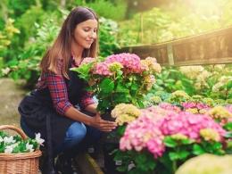 Hobi menyehatkan salah satunya menanam tanaman hias (klikdokter.com)