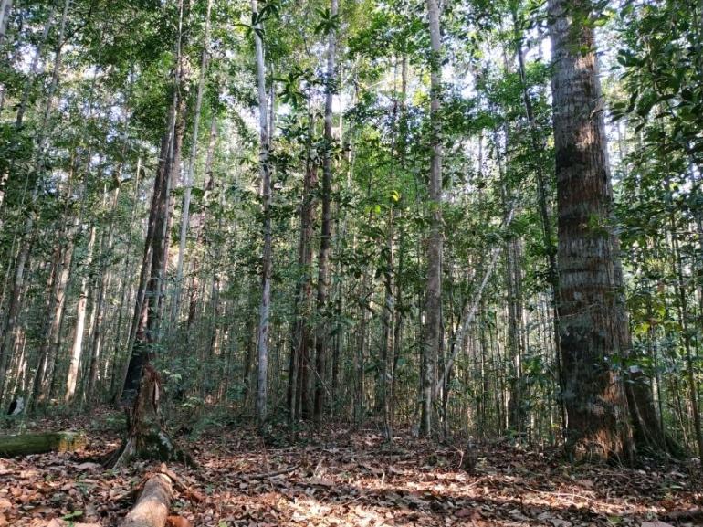 Hutan Hujan Kalimantan. (Foto : Andre Ronaldo )