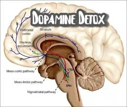 Ilustrasi proses dopamine detox   sumber gambar : ideasbehind.com