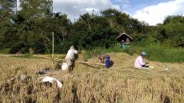 Pegangan dari bambu untuk keseimbangan badan saat perontokan pada panen padi (Dokumentasi Pribadi)