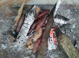 Membakar ubi ungu (Dokpri)