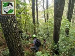 Menjelaja hutan memcari lokasi yg akan dilakukan Pembibitan dan penanaman Pohon Buah Untuk Satwa