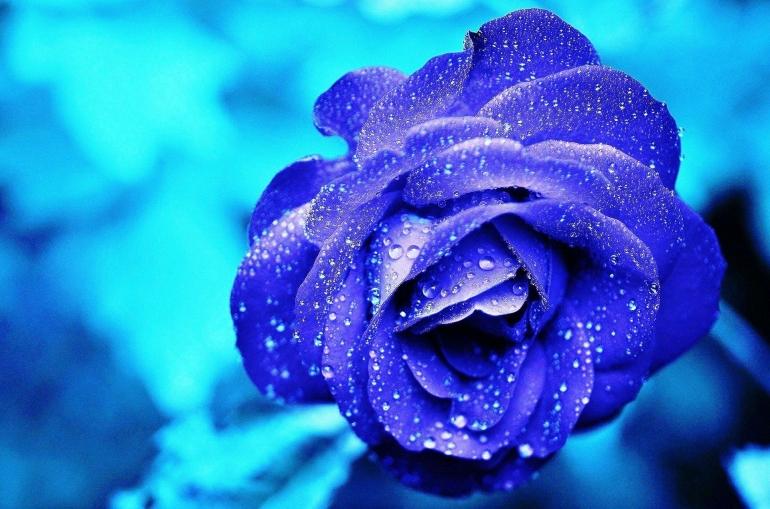 Ilustrasi Bunga Biru. Sumber: Glady on pixabay.com