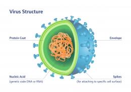Struktur virus (sanitized.com)