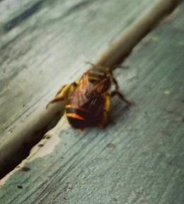 Ilustrasi: sang lebah/dokpri