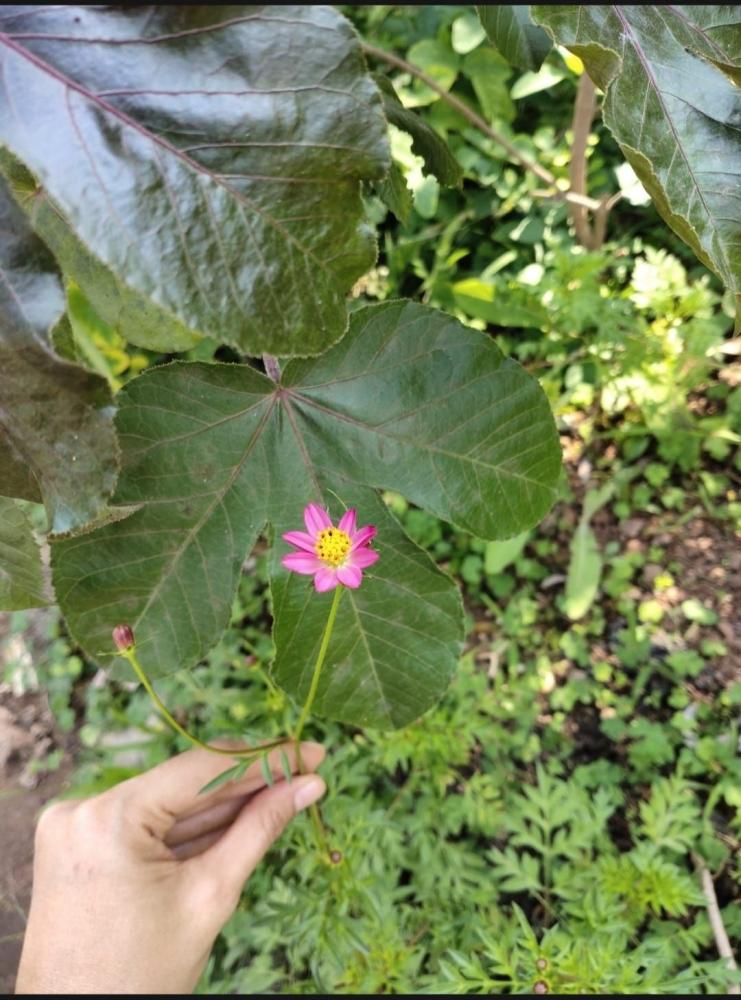 Mengenal Bagian-Bagian Bunga di Laboratorium Hidup. Sumber gambar: dokumentasi pribadi