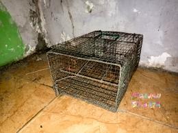 Perangkap tikus (Dokumentasi Mawan Sidarta)