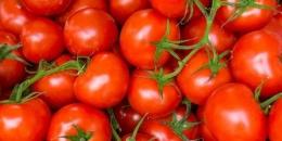 Ilustrasi tomat (Foto: sehatq.com)