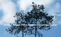 Pinus Berbincang dengan Awan (Dokumen Pribadi)