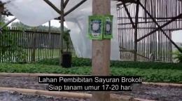 Gambar : Lahan UMKM Pembibitan Sayuran Brokoli Di Desa Darawolong Karawang (Dokpri)