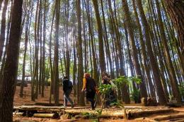 Pengunjung berjalan di antara pohon pinus di Hutan Pinus Mangunan (Kompas.com/Anggara Wikan Prasetya)