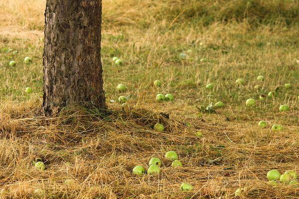 Buah jatuh tak jauh dari pohonnya (sumber: pixabay.com/Manfredrichter)